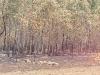 bosquesquemadoscaminoaciebfuegoss