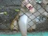 zoo02