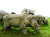 20-animales-del-paleolitico