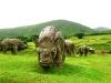 21-animales-del-paleolitico
