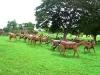 38-estampida-de-caballos-salvajes