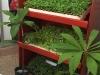 mini-plantas-vitro