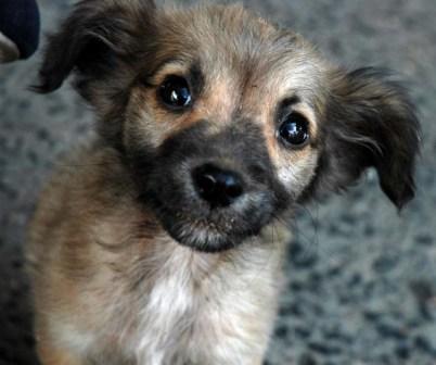 Perro de la Habana.  Foto: Caridad