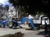 reemplazo-palmas-reales_parque-central