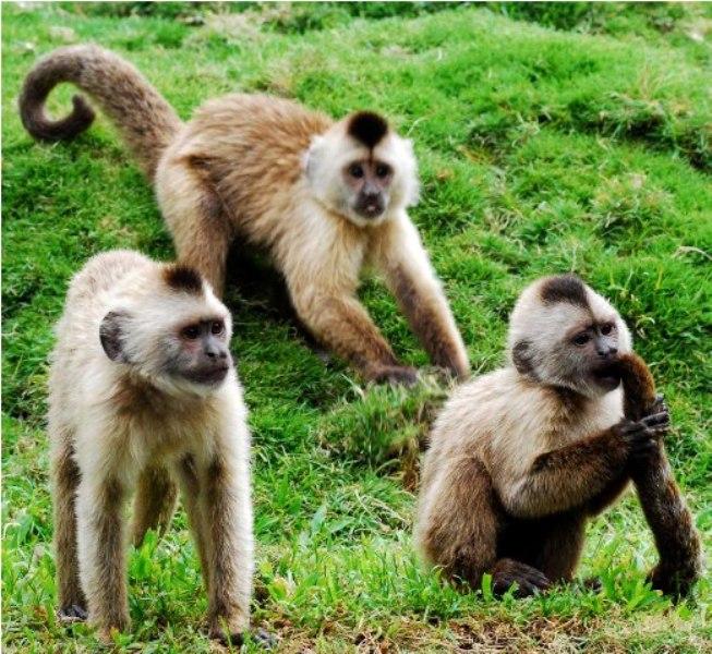Monos en el Zoo de Caracas