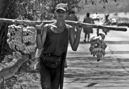 Cuban farmer and his bananas.