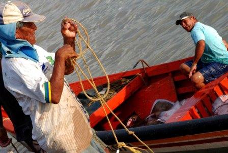 Rayas en las costas de Venezuela