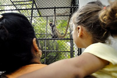 Havana Zoo