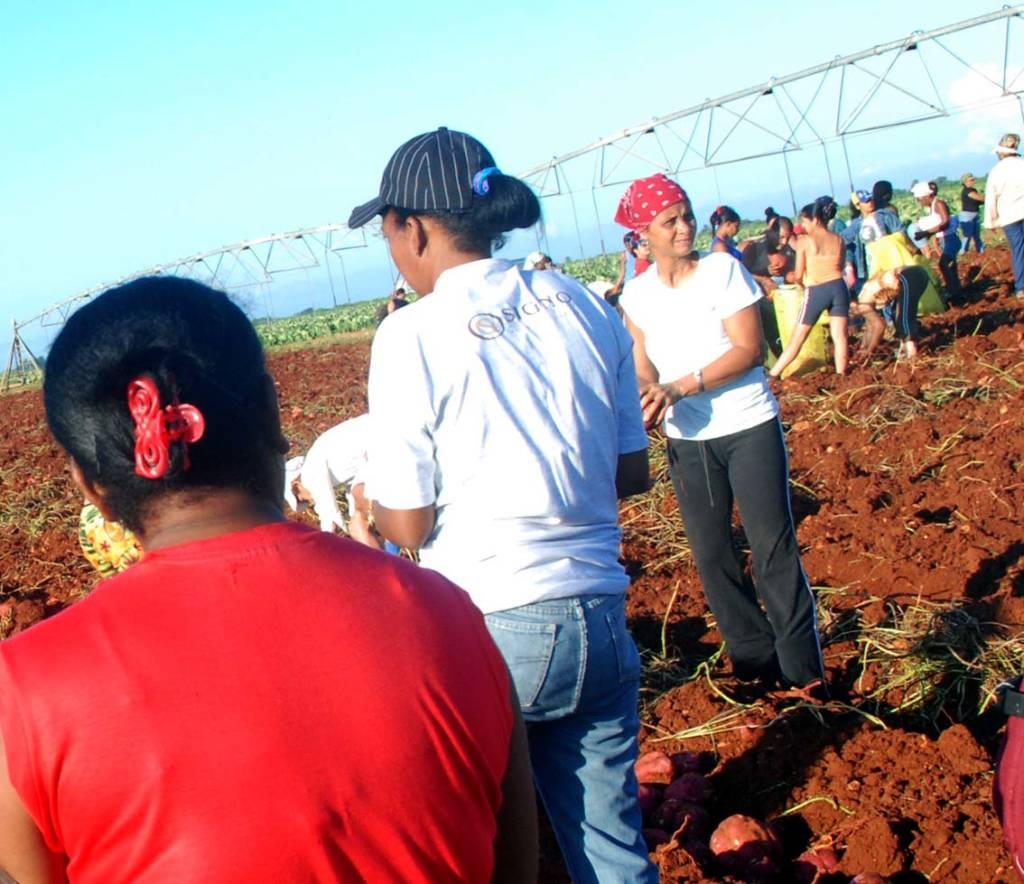 Trabajo voluntario.  Foto: Caridad
