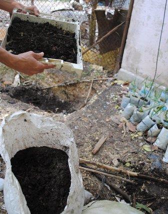 Compost listo para utilizar.