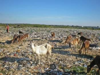 Llos animales que pastan  en este terreno, son potenciales portadores de enfermedades y sustancias tóxicas.