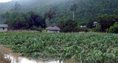 La agricultura destaca a simple vista como el sector más golpeado. Foto: Ronald Suárez Rivas